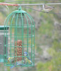 travel spain barcelona bird feeder photo
